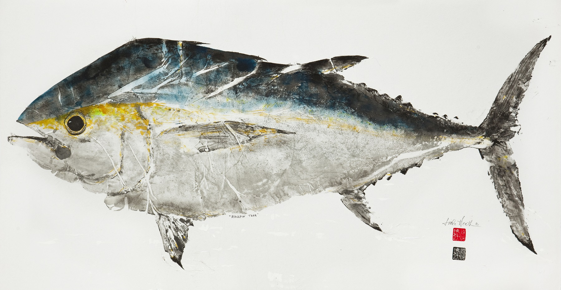 608-Black Fin Tuna