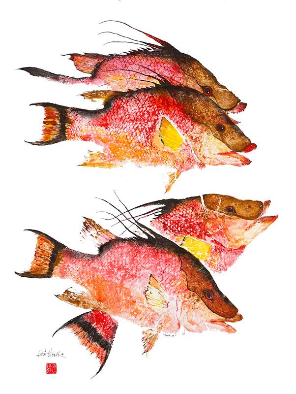 609--Hogfish