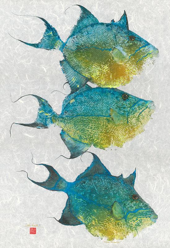 628-Queen-Triggerfish