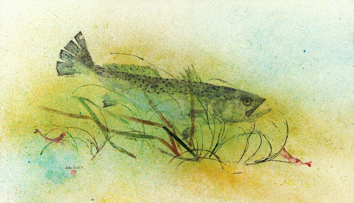 Trout in Eel Grass